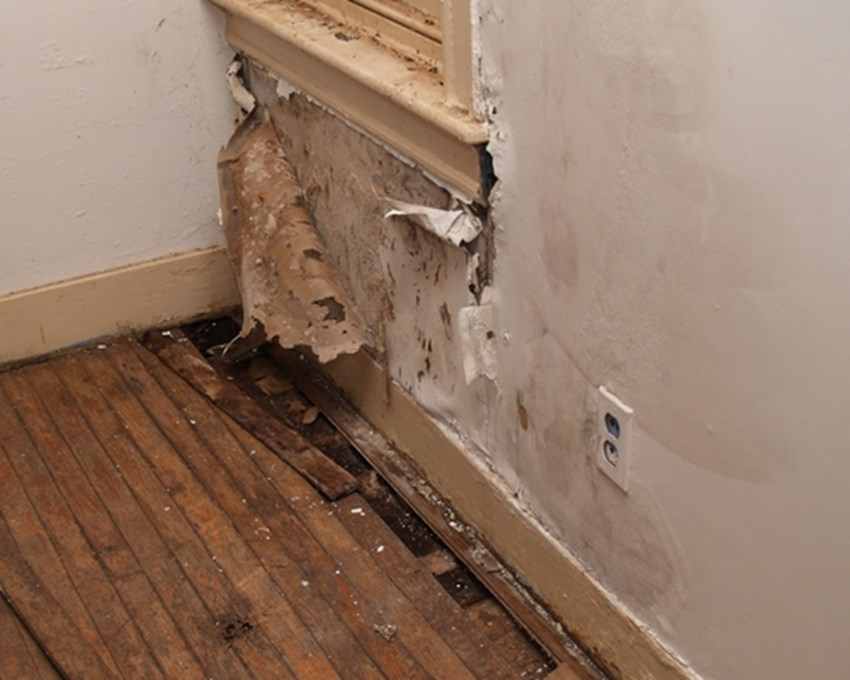 Water-damage-is-something-many-Canadian-homeowners-say-theyve-experienced_1137_420637_0_14060990_500