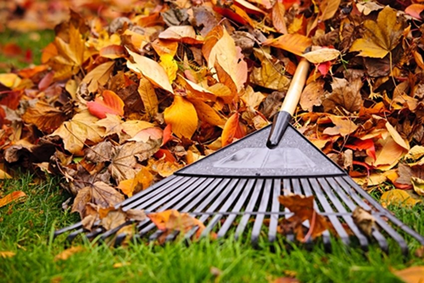 In-addition-to-removing-leaves-rakes-are-good-for-removing-thatch-_1137_663100_0_14093655_500