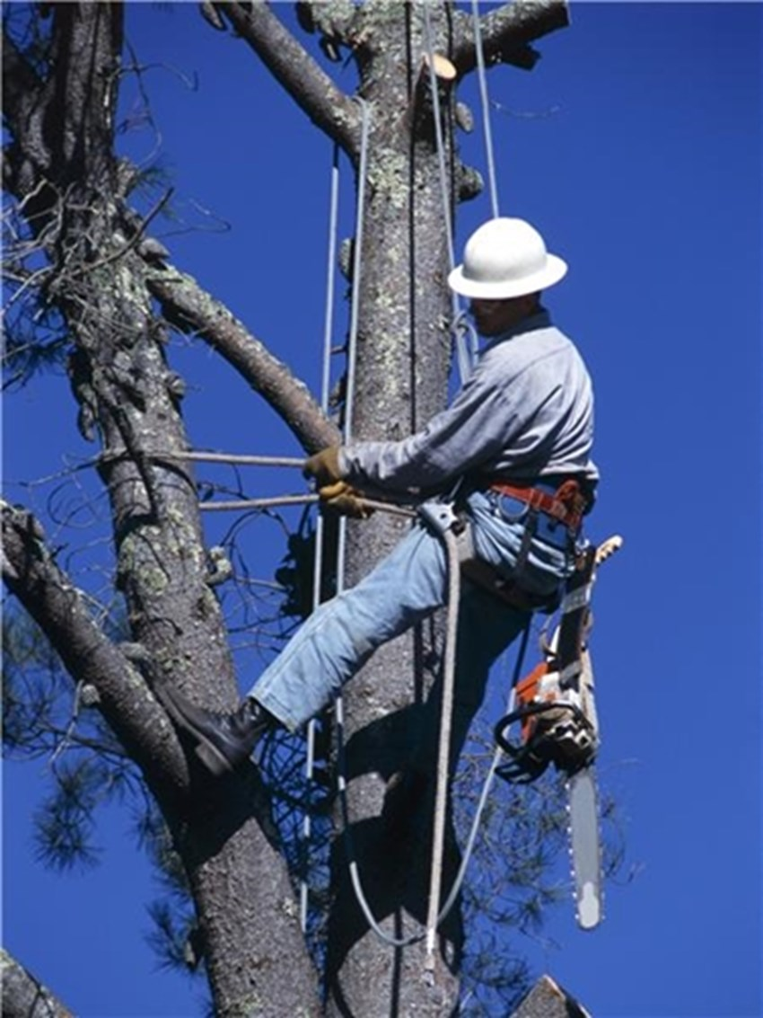 Hurricanes-may-require-the-removal-of-trees-for-homeowners-who-are-in-their-path_1137_427494_0_7015270_500