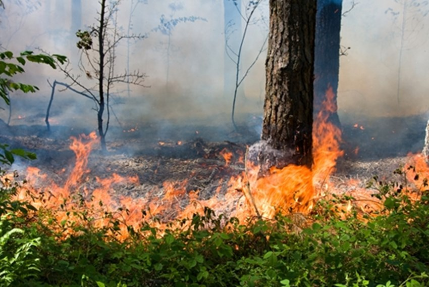 Vegetation-gives-wildfires-the-fuel-they-need-to-expand-which-is-why-its-crucial-to-maintain-land-so-that-this-is-not-an-issue_1137_430014_0_14064860_500