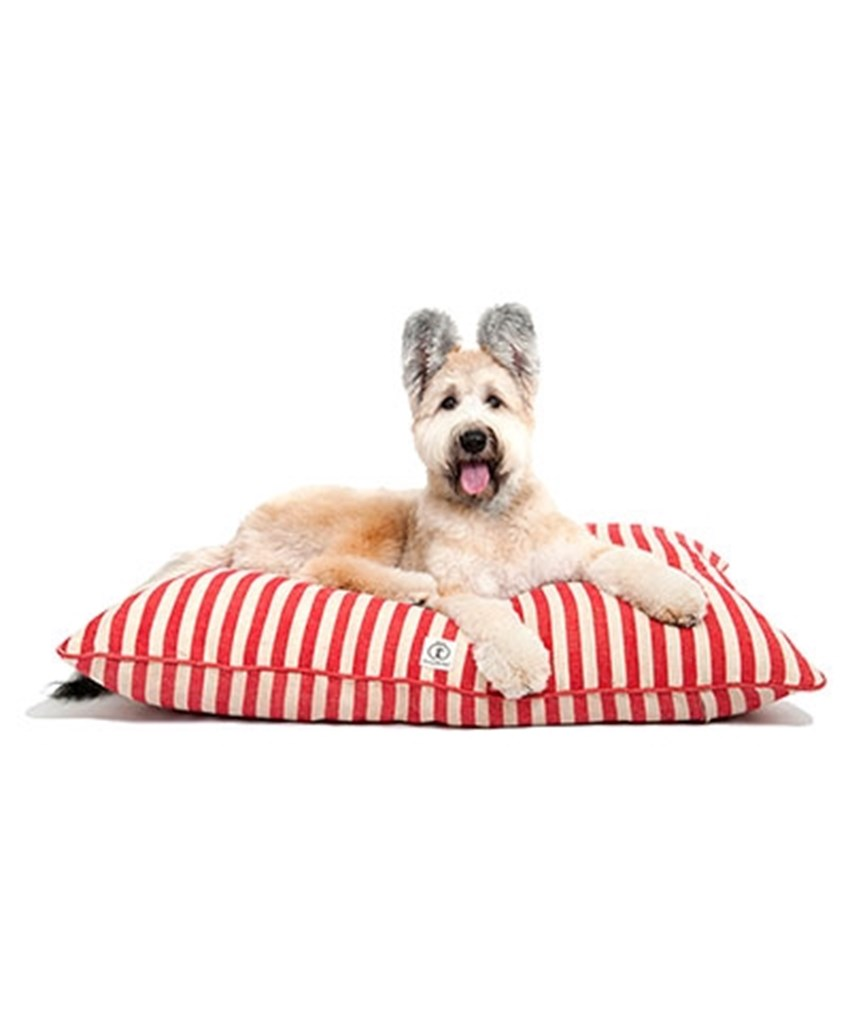 Providing-a-bed-for-your-pet-is-a-great-way-to-keep-it-off-your-furniture-_1137_652075_0_14106004_480